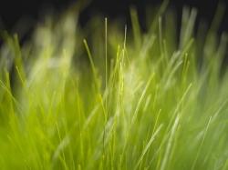Allergies/Hayfever, grass, allegen, homeopathy